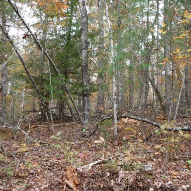 Additional photo for property listing at 251.98 Charley Hull Loop Road 251.98 Charley Hull Loop Road Allardt, Теннесси 38504 Соединенные Штаты