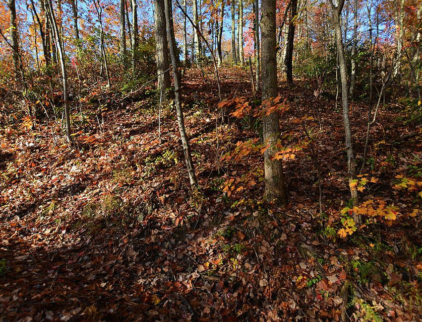 Additional photo for property listing at Lot 11 Lower Alpine Way Lot 11 Lower Alpine Way Gatlinburg, Tennessee 37738 Estados Unidos
