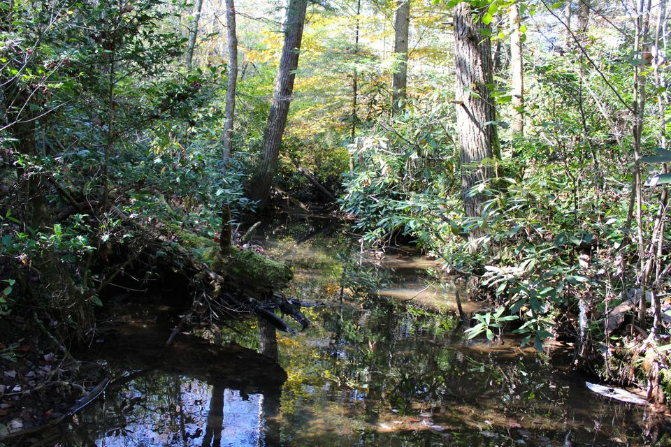 Land for Sale at Double Arch Retreats Double Arch Retreats Allardt, Tennessee 38504 United States