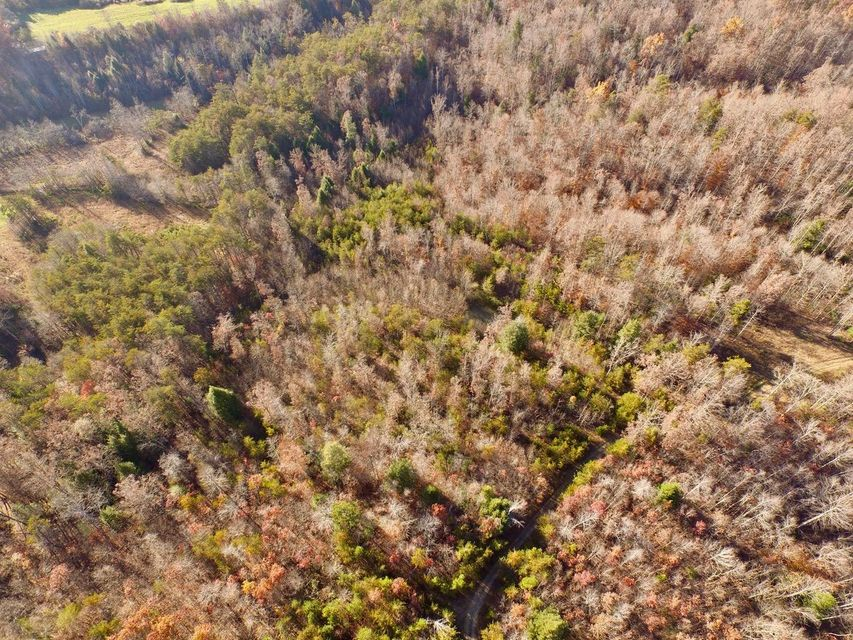 Additional photo for property listing at 12.42ac Lovejoy Lane 12.42ac Lovejoy Lane Monterey, Tennessee 38574 United States