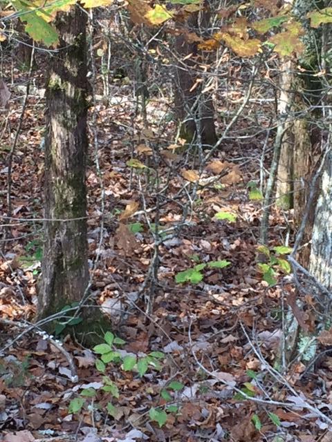 Земля для того Продажа на 108 Noya Lane 108 Noya Lane Loudon, Теннесси 37774 Соединенные Штаты