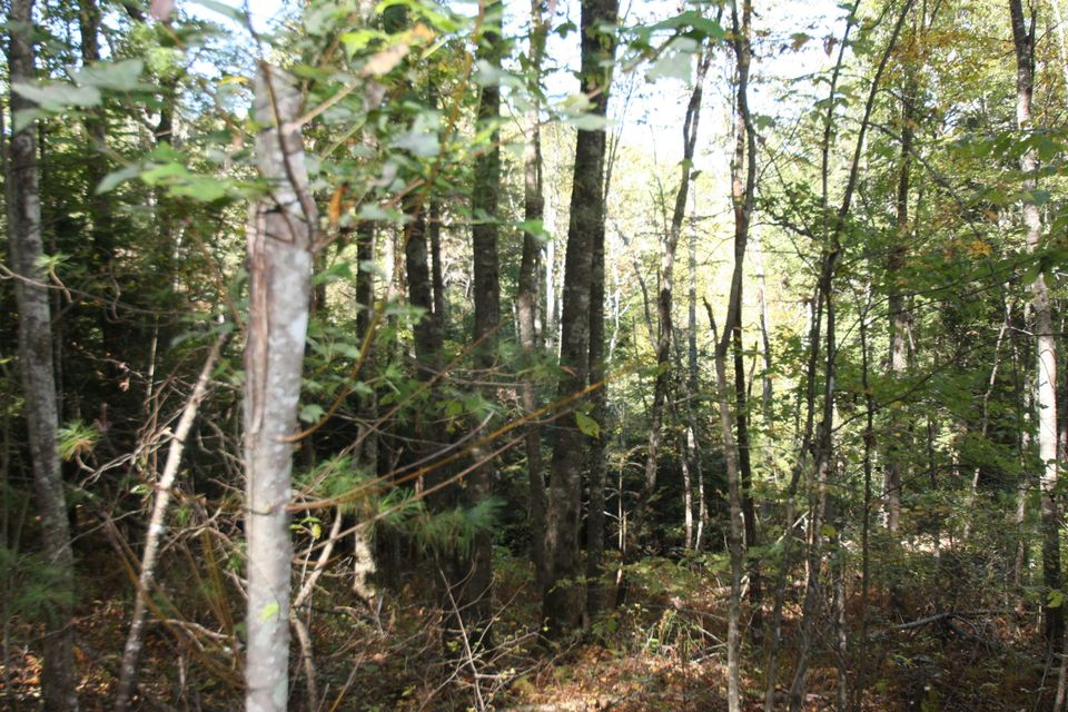 Land for Sale at 163 Gibson Lane 163 Gibson Lane Lancing, Tennessee 37770 United States