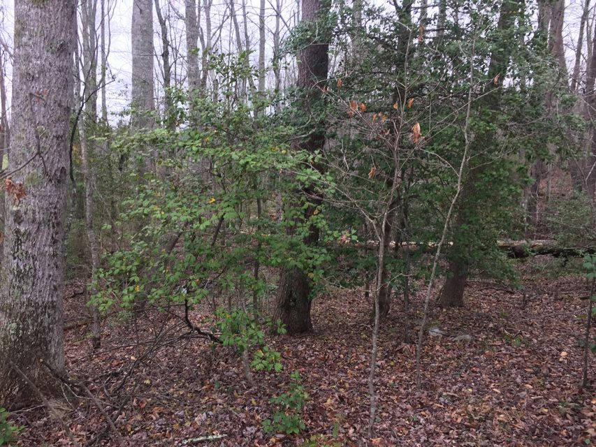 Additional photo for property listing at 10 Acres Off Thomas Springs Road 10 Acres Off Thomas Springs Road Crossville, Tennessee 38572 États-Unis