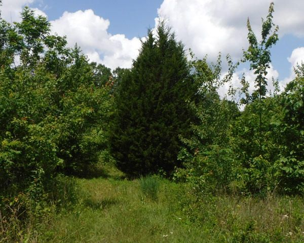 Additional photo for property listing at 43.94 Acre Limerick Drive 43.94 Acre Limerick Drive Crossville, Tennessee 38572 États-Unis