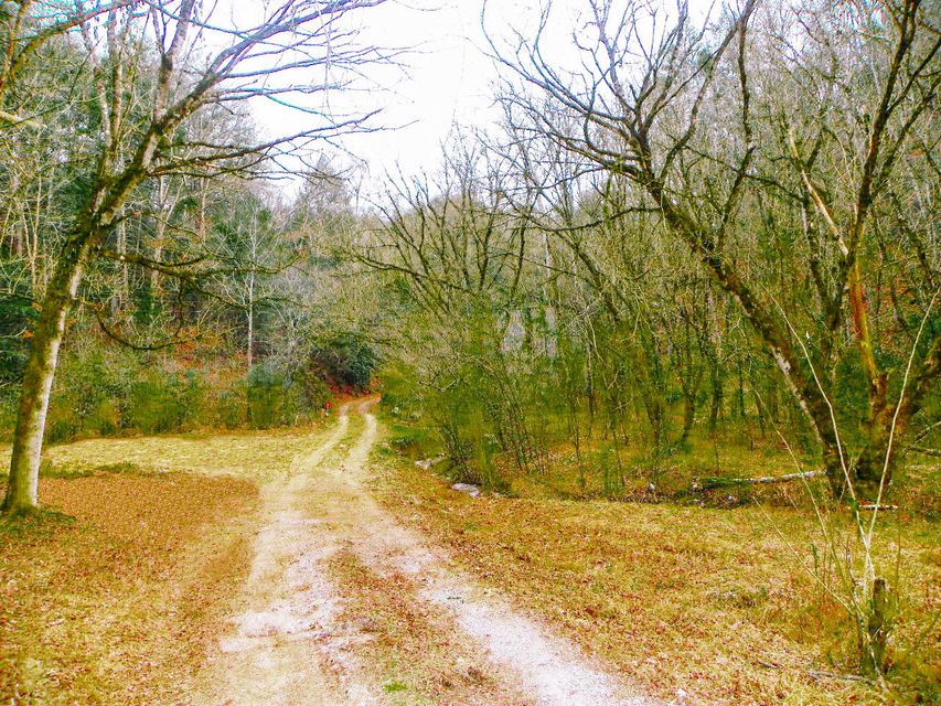 Land for Sale at 1876 Upper Middle Creek Road 1876 Upper Middle Creek Road Sevierville, Tennessee 37876 United States