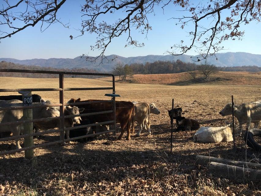 Casa Unifamiliar por un Venta en 4245 Speaks Branch Road 4245 Speaks Branch Road Rose Hill, Virginia 24281 Estados Unidos