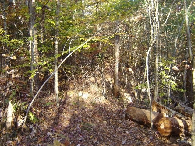 Additional photo for property listing at 138 Anatole Pass 138 Anatole Pass Townsend, Tennessee 37882 Estados Unidos