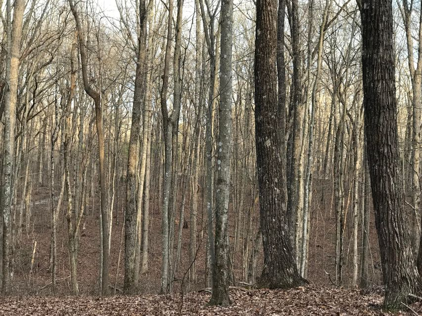 Additional photo for property listing at 2.74 Acres Valley View Road 2.74 Acres Valley View Road Pikeville, Tennessee 37367 Estados Unidos