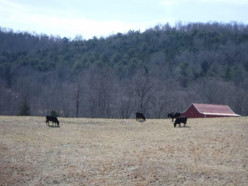 Additional photo for property listing at 4986 Reed Creek Road 4986 Reed Creek Road Pall Mall, Tennessee 38577 Estados Unidos