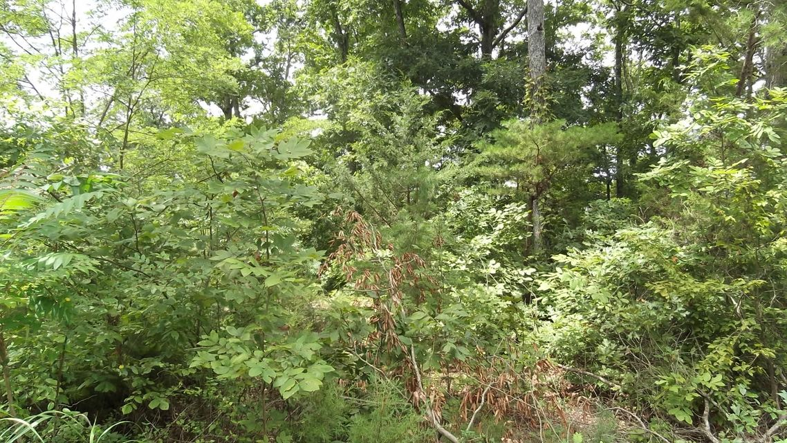 Terreno por un Venta en Lot 1147 Lakefront Place Lot 1147 Lakefront Place Baneberry, Tennessee 37890 Estados Unidos