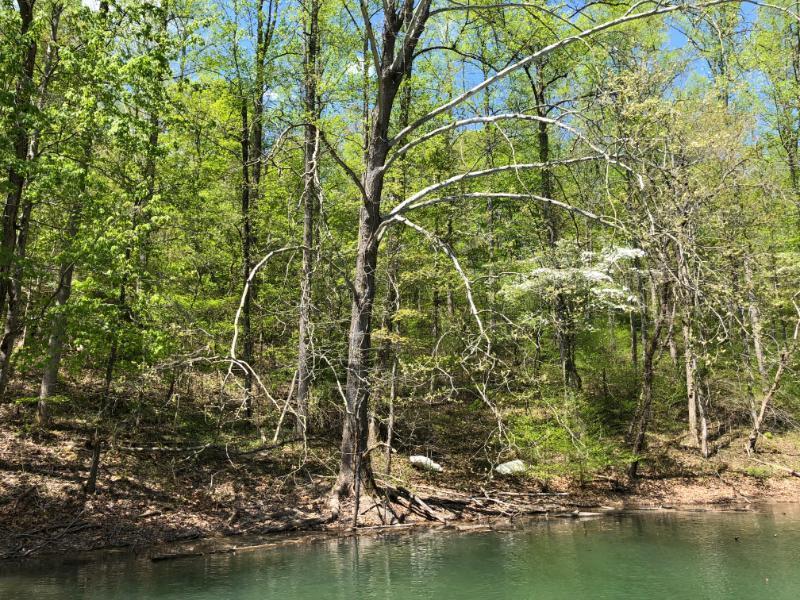 Big Creek Lane: