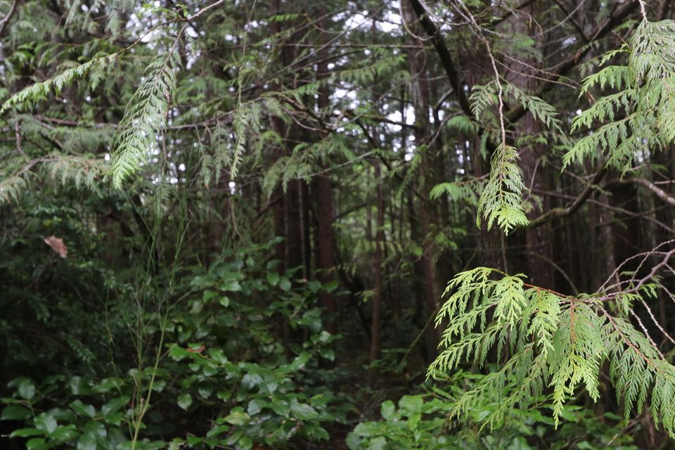 T/L 2000 SW Flansberg Rd, Waldport, OR 97394 - Wooded lot
