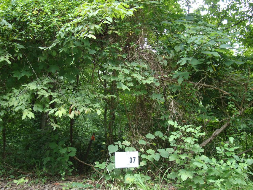 Land for Sale at Lot 37 Gannaway Leitchfield, Kentucky 42754 United States
