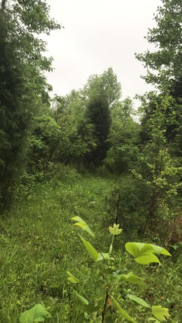 Additional photo for property listing at 1850 Highway 1073  Harned, Kentucky 40144 United States