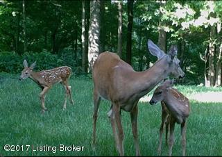 Additional photo for property listing at Lot 4&5 MORTON RIDGE Lot 4&5 MORTON RIDGE Bedford, Kentucky 40006 United States