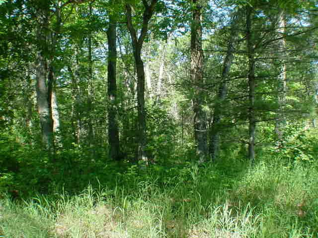 Photo of home for sale at 5.4 Ac Norton Rd, Shawano WI
