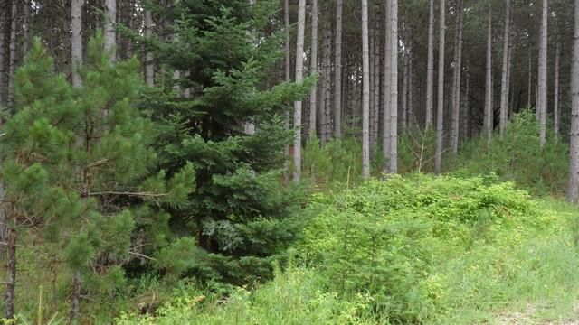 Old Orchard Trail, Wausaukee, WI 54177