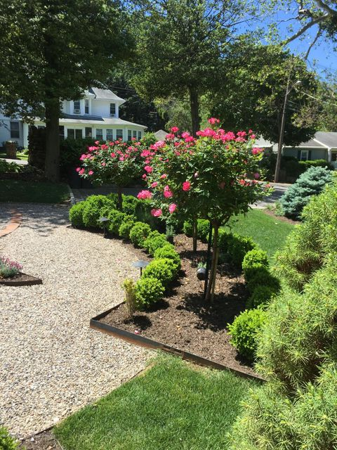 View of Blooming Shrubs