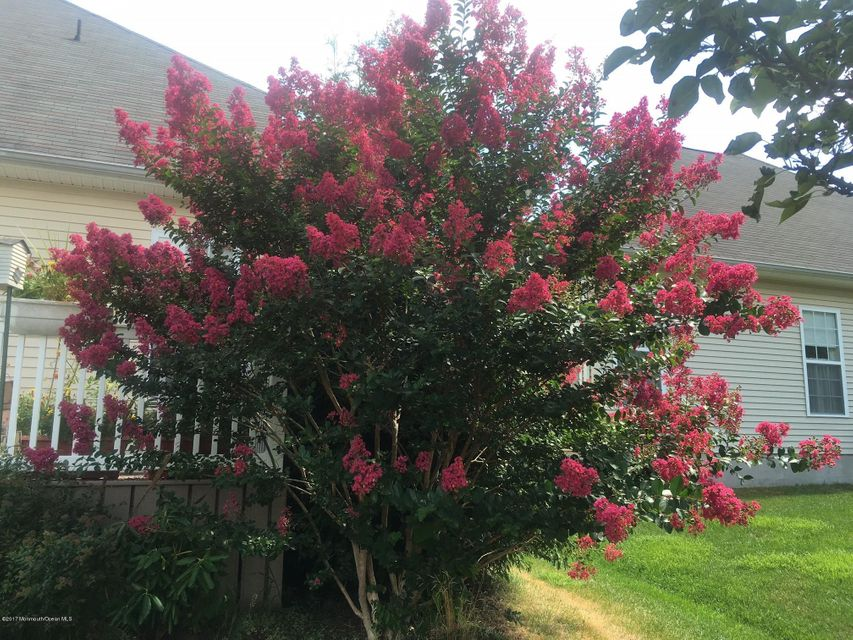 77 maypink tree