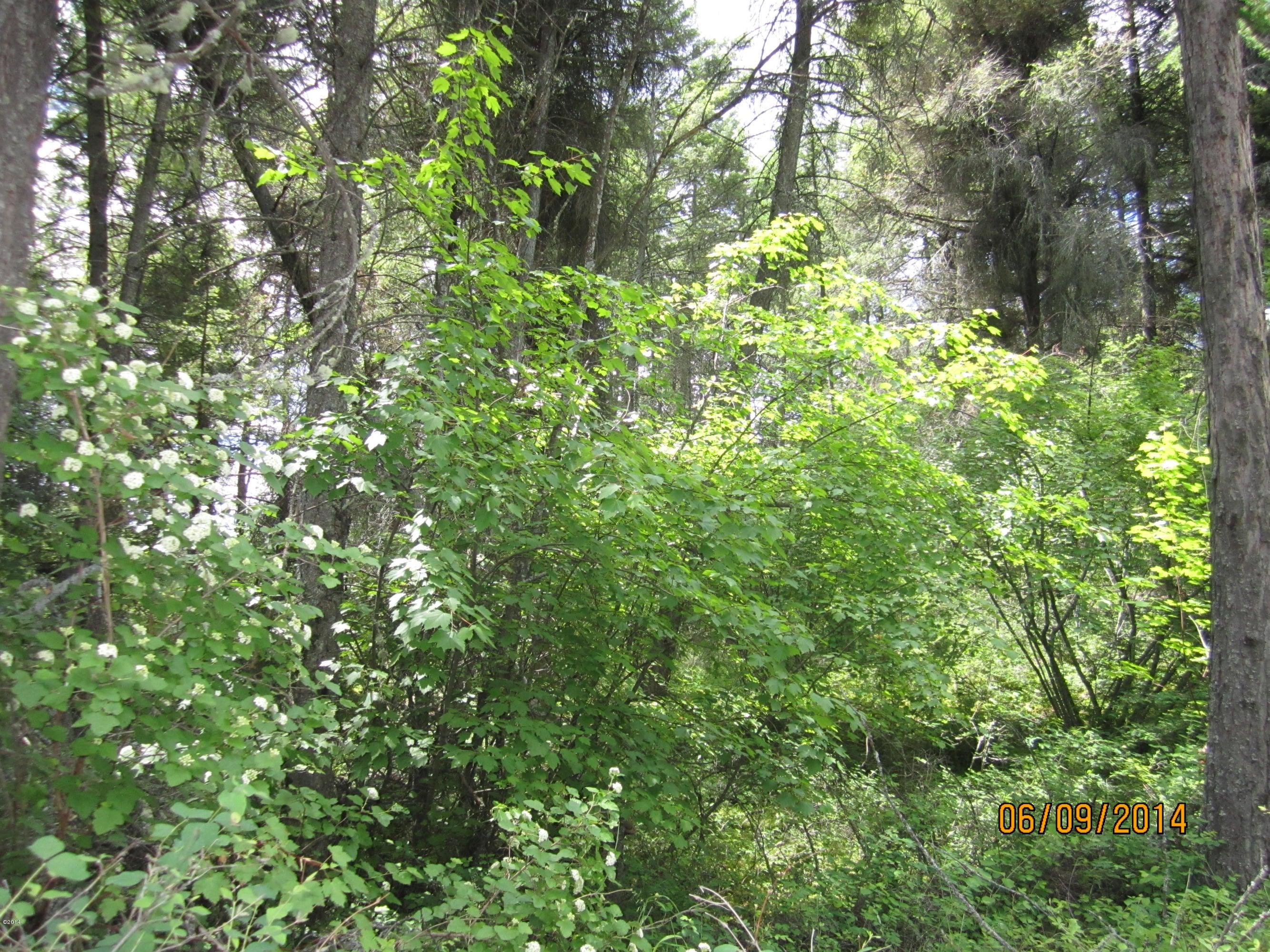 Nhn Pine Bigfork, Montana - 327707