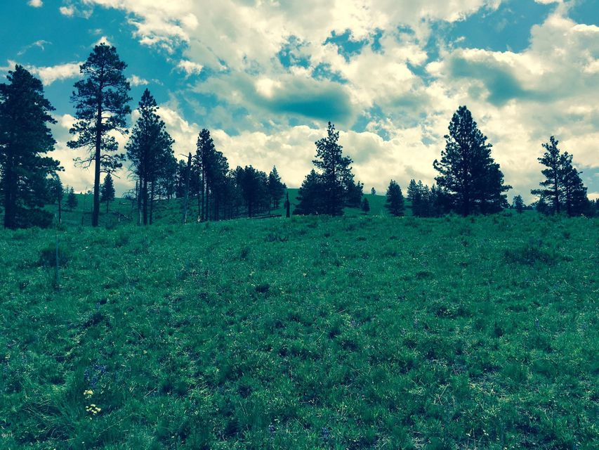 Additional photo for property listing at Camp Creek Road  Sula, Montana 59871 United States