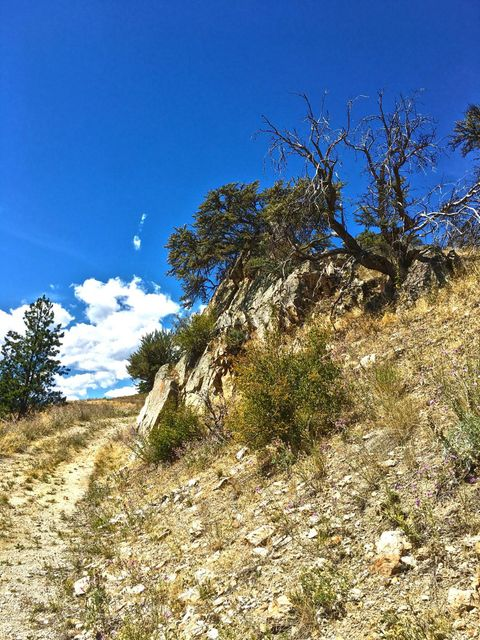 Additional photo for property listing at 116  Whiskey Gulch Road  Conner, モンタナ,59827 アメリカ合衆国