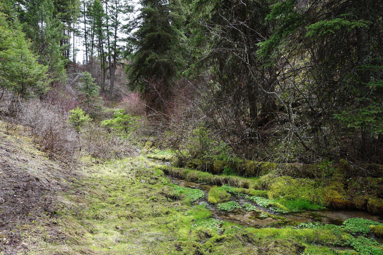 Additional photo for property listing at 6300 Camas Creek Road  Potomac, Montana 59823 United States
