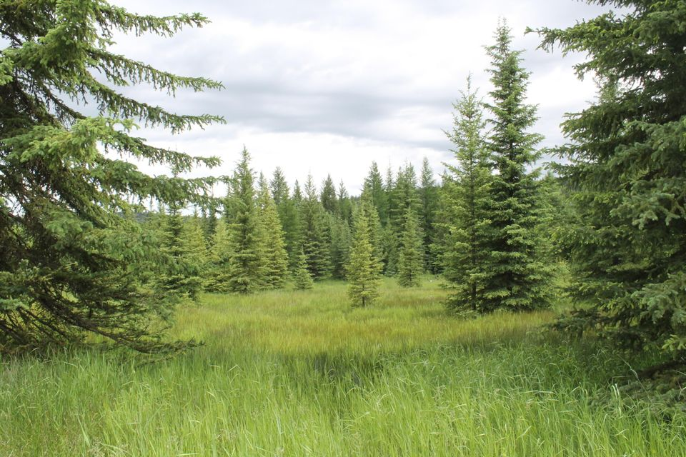 Additional photo for property listing at 882 Gut Creek Road 882 Gut Creek Road Rexford, Montana 59930 United States
