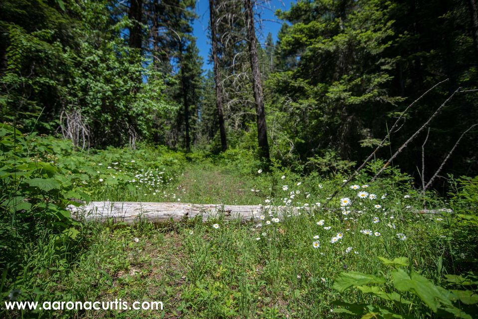 Additional photo for property listing at 11433 Bench Road 11433 Bench Road Missoula, Montana 59808 United States