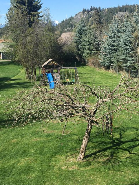 Back yard with Apple & Plum trees