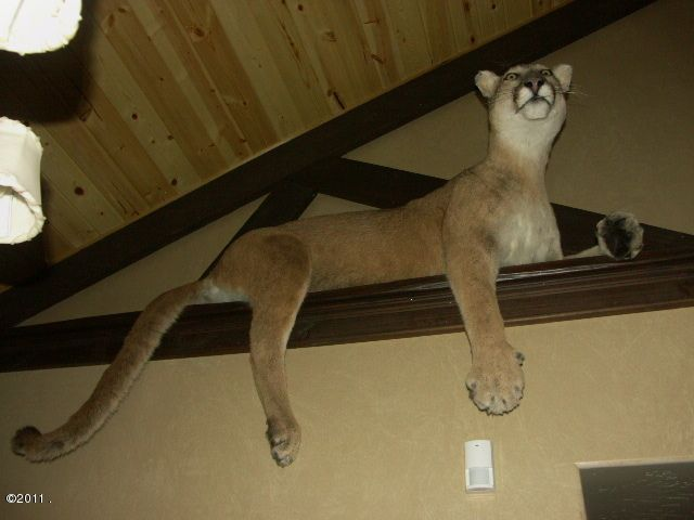 Caretaker Mt. Lion Mount