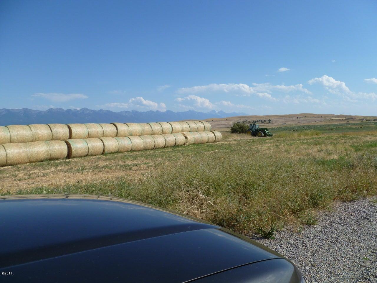 lots of hay