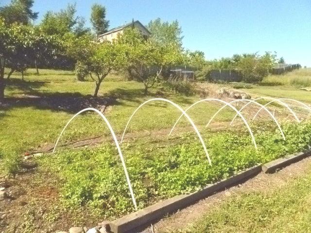 garden back yard