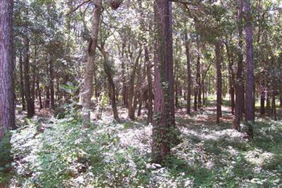 665  Cypress Grove Court Bolivia, NC 28422