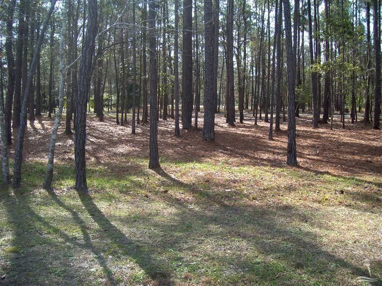 Carolina Plantations Real Estate - MLS Number: 20663491