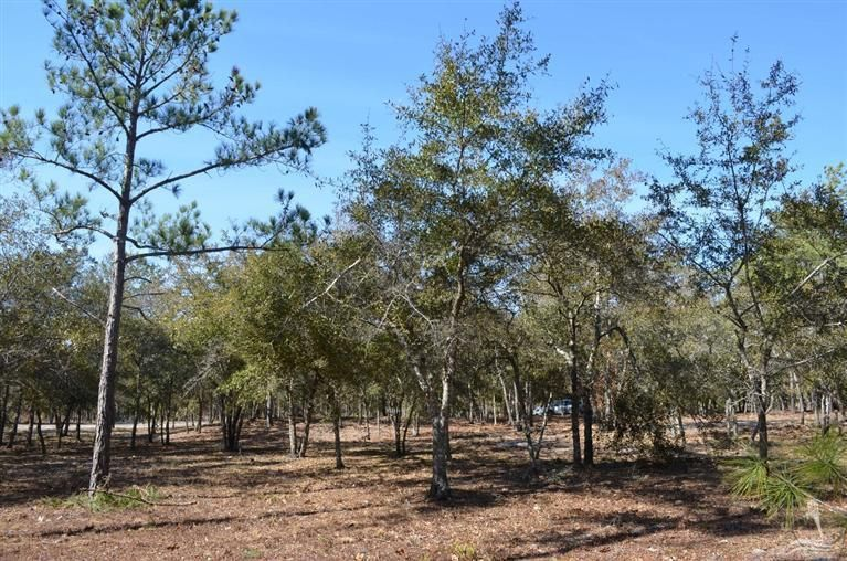 686 Loreauville Drive,Supply,North Carolina,Residential land,Loreauville,20689404