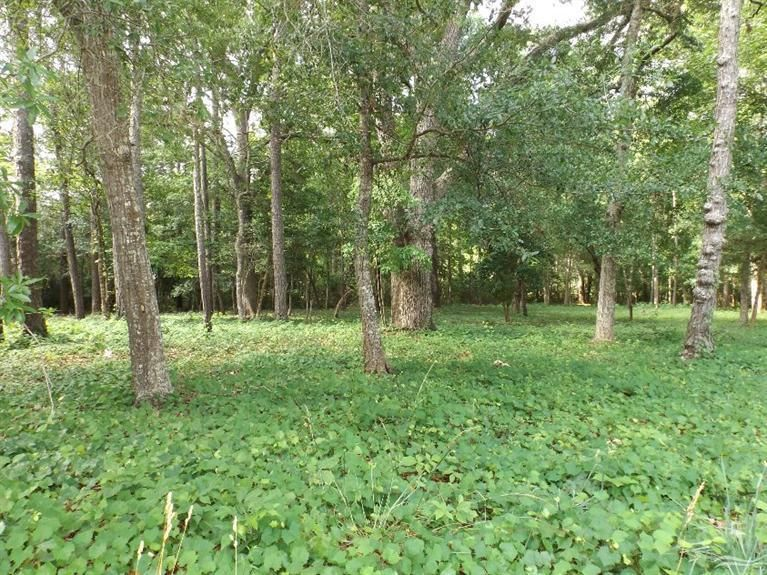 Carolina Plantations Real Estate - MLS Number: 100032549