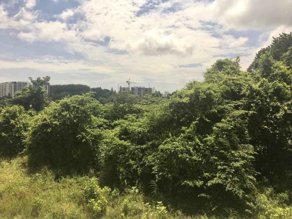 PANAMA VIP10, S.A. Apartamento en Alquiler en Albrook en Panama Código: 17-5688 No.7