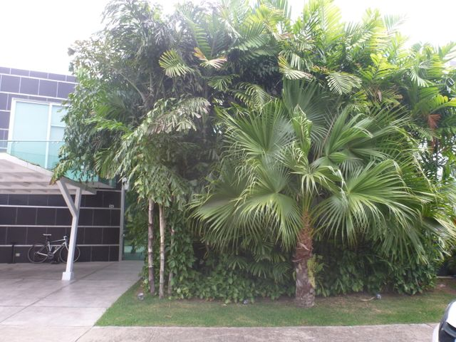 Casa / Alquiler / Panama / Costa Sur / FLEXMLS-18-2569