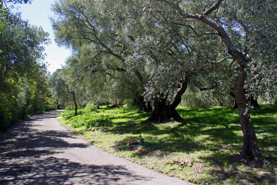 805 Romero Canyon Rd, SANTA BARBARA, CA 93108