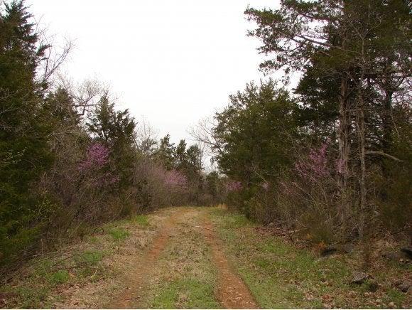 Tbd Brushy Creek Road