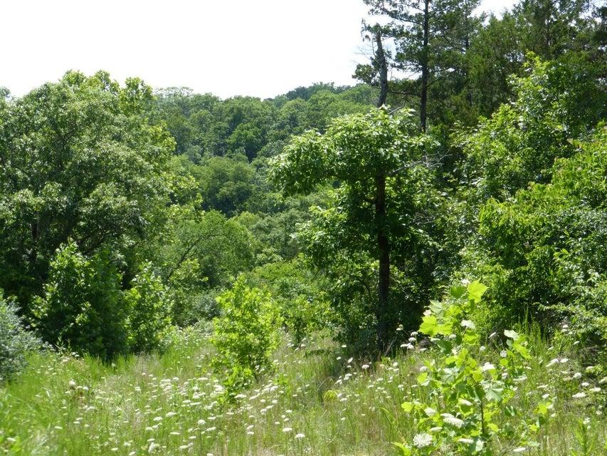 Shenandoah Forsyth, MO 65653