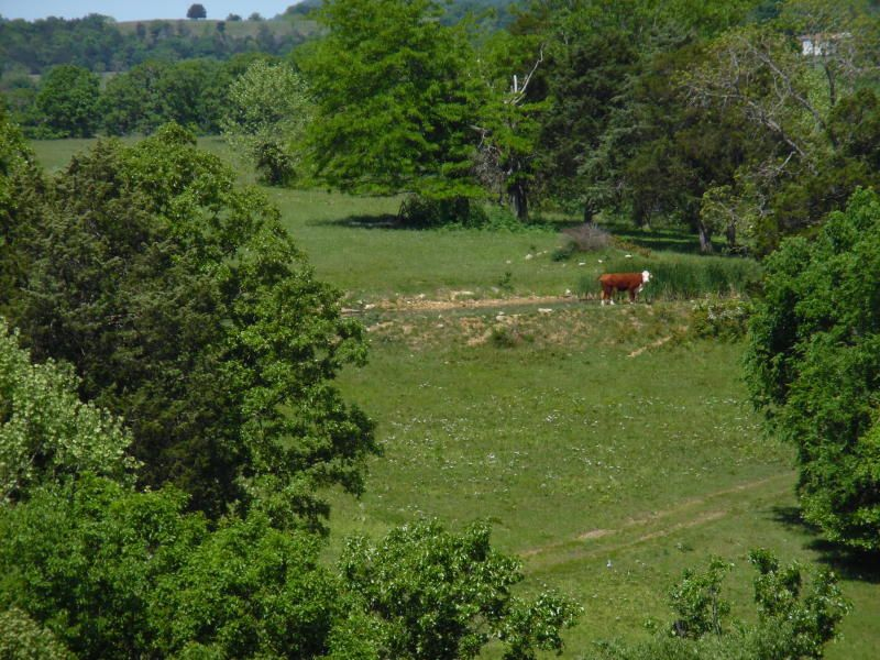 26318 Farm Road 1197, Apt 270 Farm