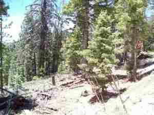 Additional photo for property listing at 1915 CIRCLE Drive 1915 CIRCLE Drive Duck Creek Village, Utah 84762 Estados Unidos