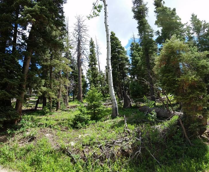 Additional photo for property listing at 6435 Kodiak Drive 6435 Kodiak Drive Duck Creek Village, 犹他州 84762 美国