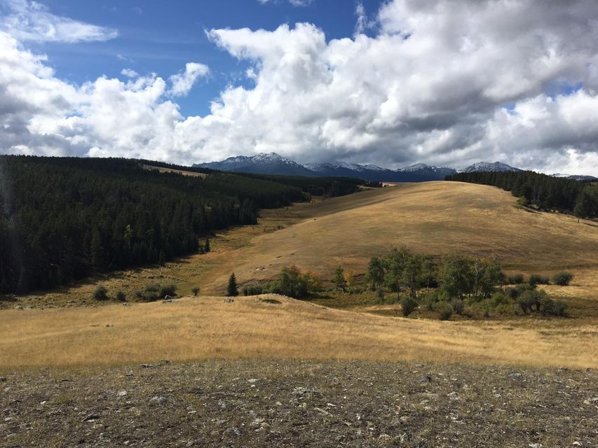 Tract 2 Poison Creek Road,Buffalo,Wyoming 82834,Ranch-Land,Poison Creek,18-611