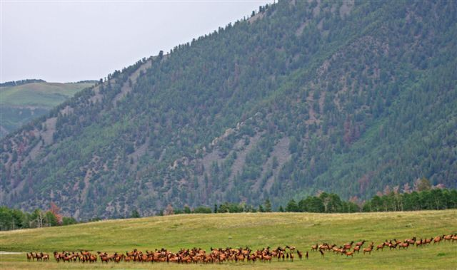 Additional photo for property listing at TBD Sound of Music Ranch  Placerville, Colorado,81430 Verenigde Staten