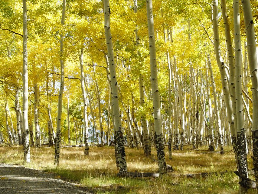 Additional photo for property listing at Parcel CR Sound of Music Ranch  Placerville, Colorado,81430 États-Unis