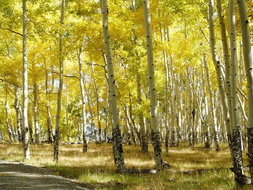 Additional photo for property listing at Parcel CR Sound of Music Ranch  Placerville, Colorado,81430 Amerika Birleşik Devletleri