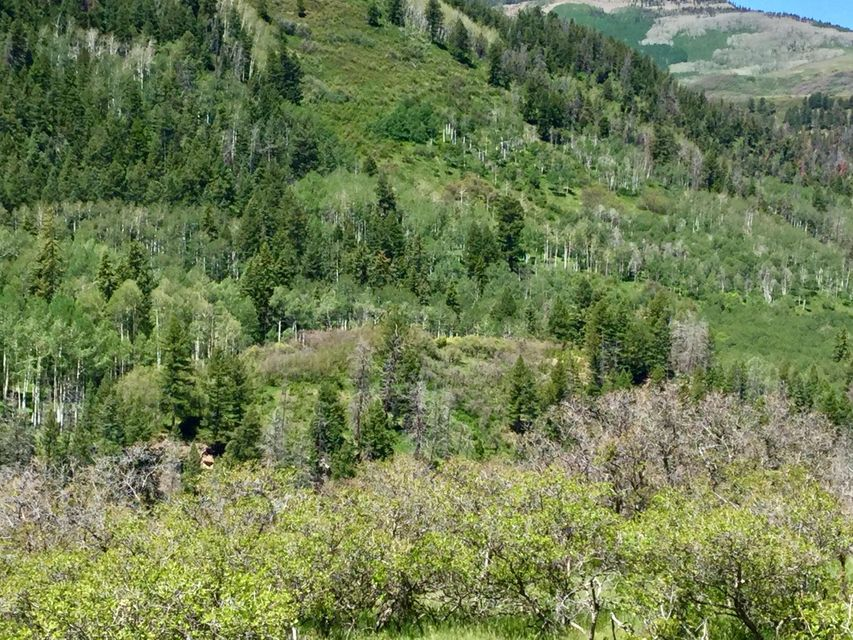 Additional photo for property listing at 973 Posey Road  Placerville, Colorado,81430 Hoa Kỳ